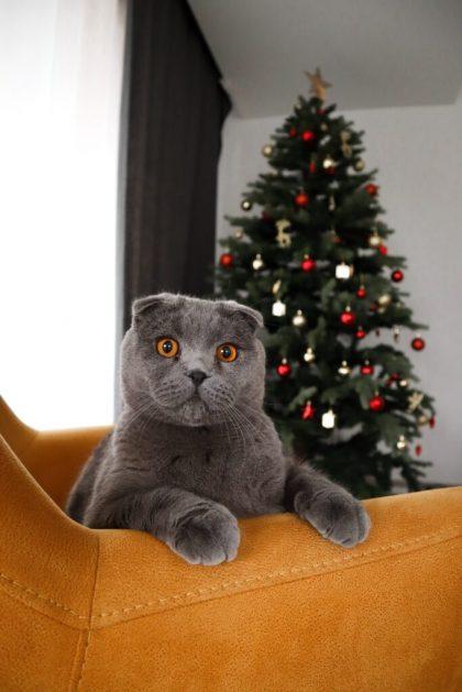 pisica si brad de craciun artificial